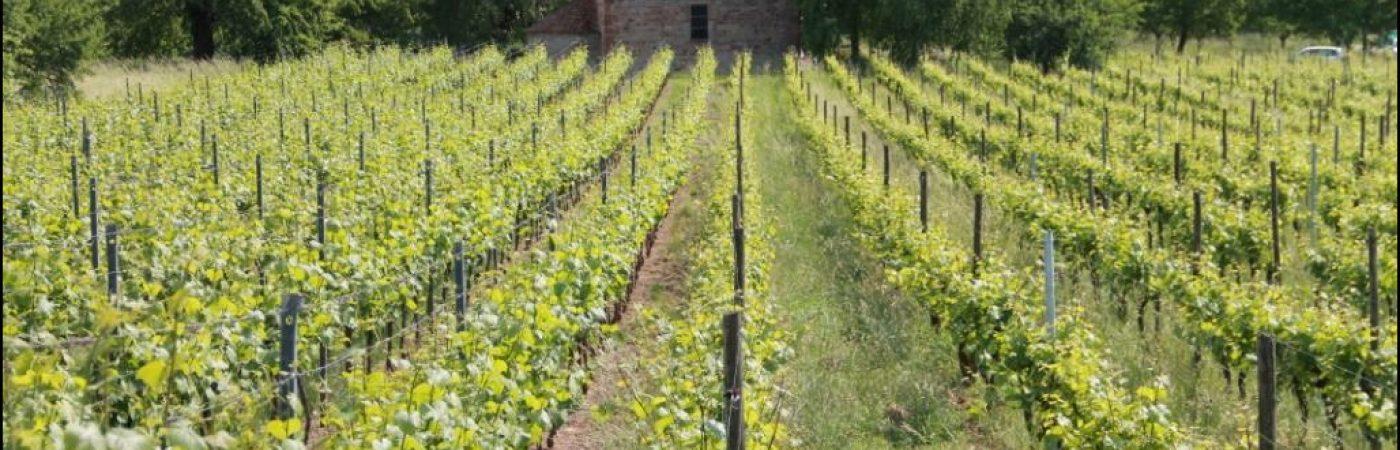 P-13332-F218008818_coteau-viticole-le-kefferberg-ergersheim.jpg