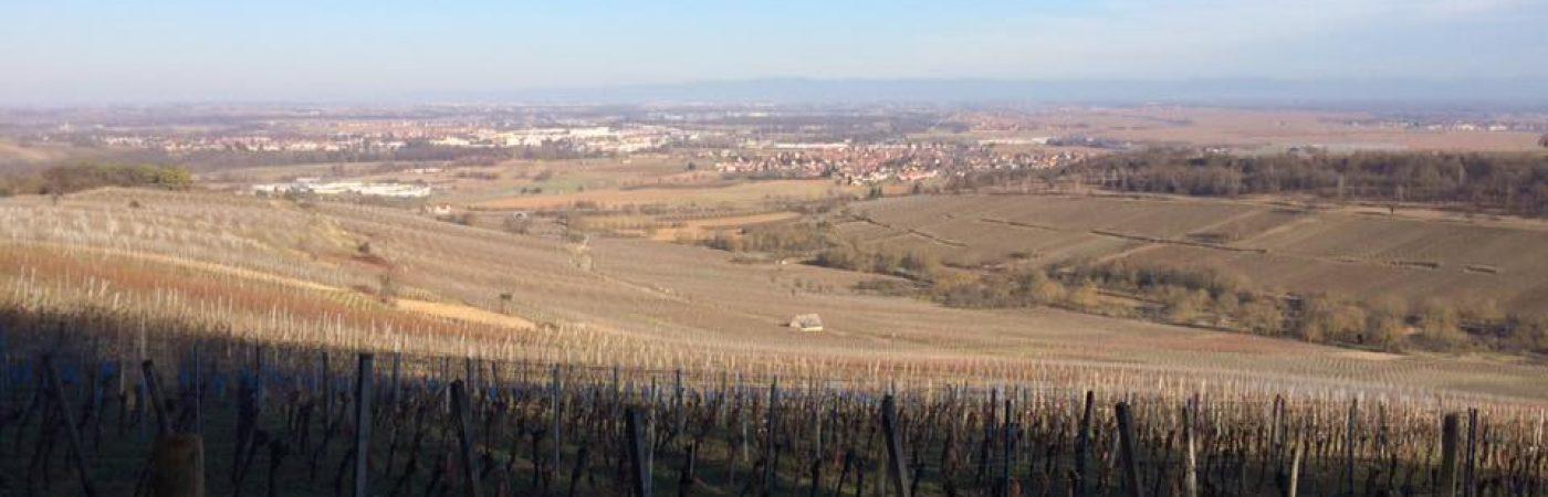 P-13350-F218008756_point-de-vue-sur-le-vignoble-de-dorlisheim-dorlisheim.jpg