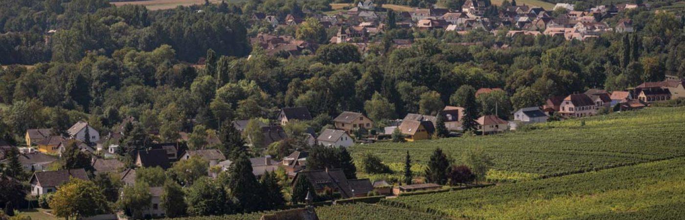 P-14037-F218008769_visite-libre-dans-le-village-viticole-de-wolxheim-wolxheim.jpg