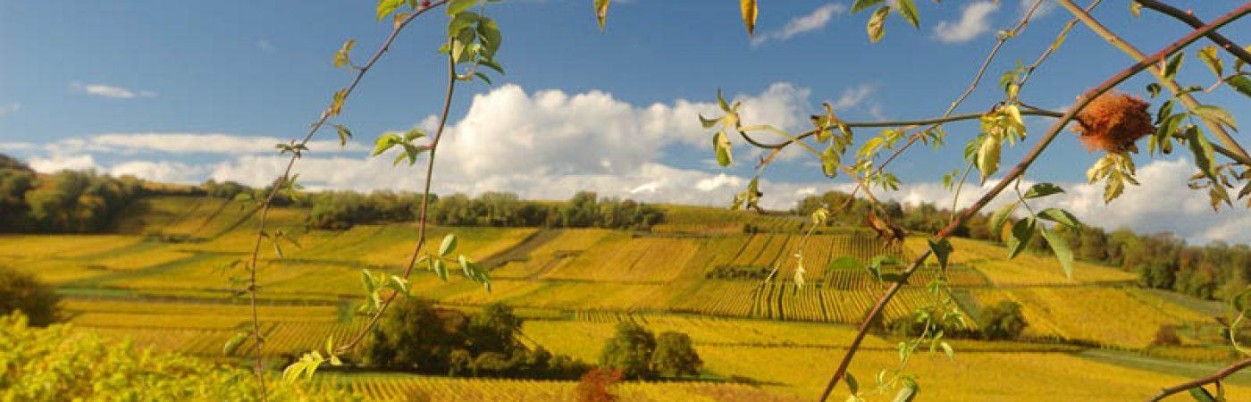 P-14098-F218001534_sentier-viticole-du-husaren-dorlisheim.jpg