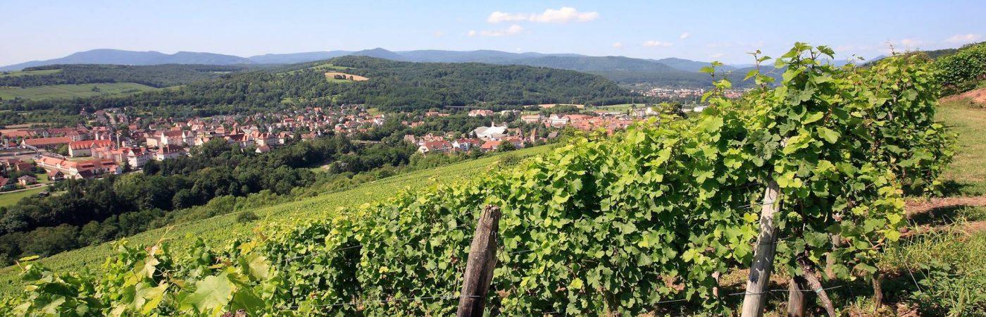 P-24433-F218004709_sentier-viticole-circuit-du-vignoble-mutzig.jpg