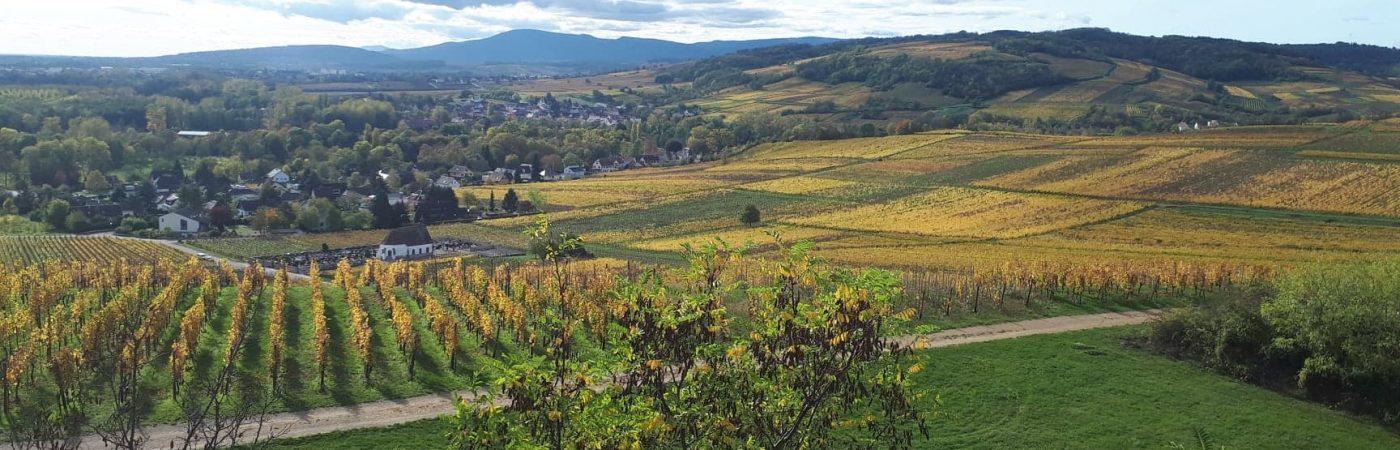 P-24443-F218004517_sentier-viticole-de-wolxheim-wolxheim.jpg