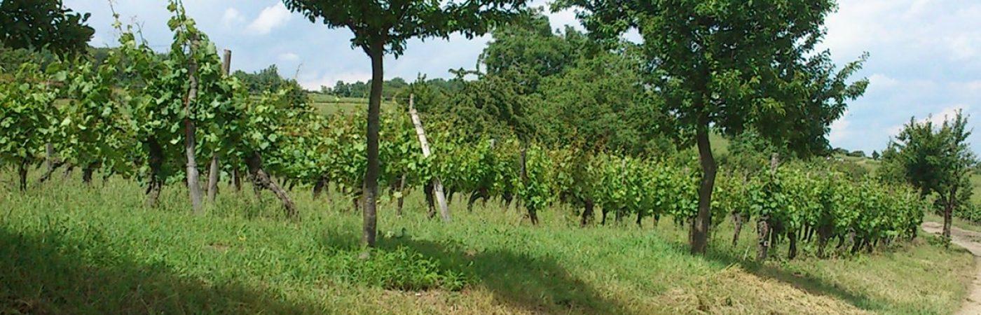 P-24913-F218001533_sentier-viticole-du-bruderthal-molsheim.jpg